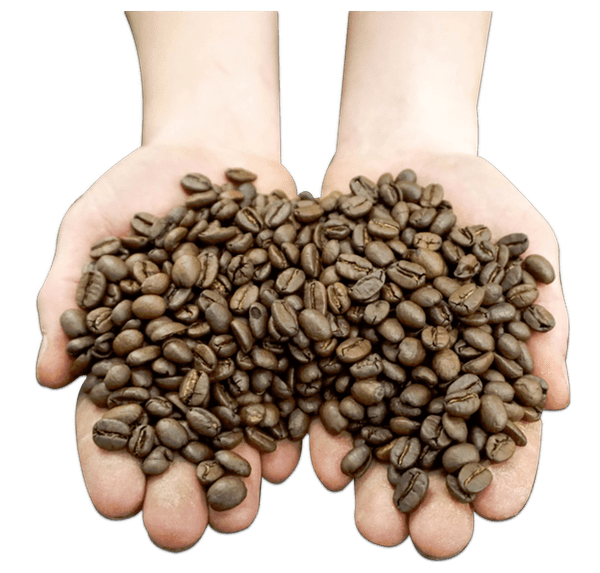 Coda Coffee Beans in hand